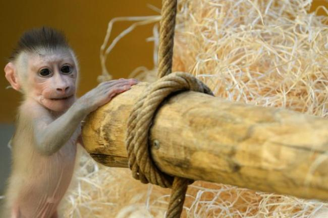 World Monkey Day 2015: Cool Facts, Cute Photos And Ways To Support These ...