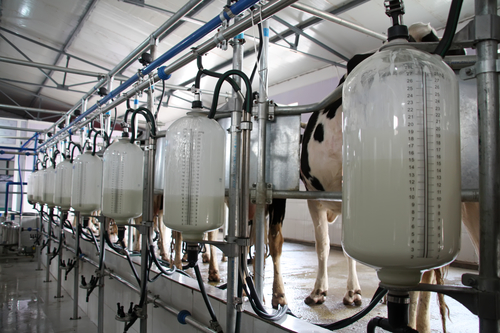 Milk Output Record High in the Forecast for 2016