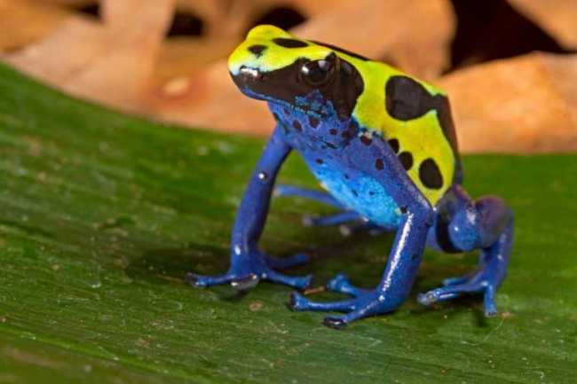 Frog conservation in the spotlight on Save the Frogs Day