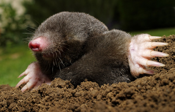 6.02 x 10^23 Reasons to Celebrate: Today Is Mole Day!