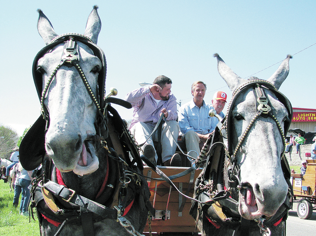 Haslam heads Mule Day parade