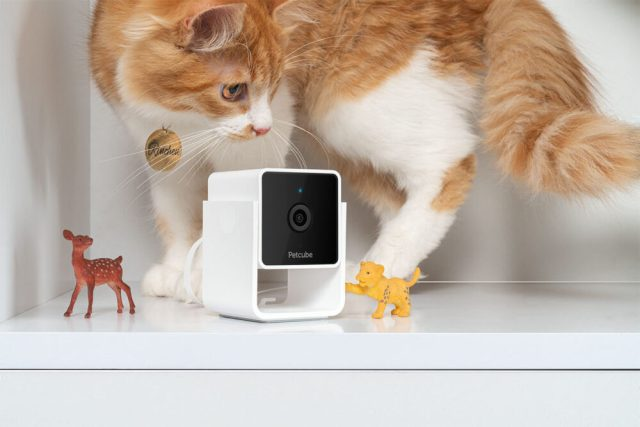 Petcube launches Cam, an affordable pet camera integrated with vet consultants