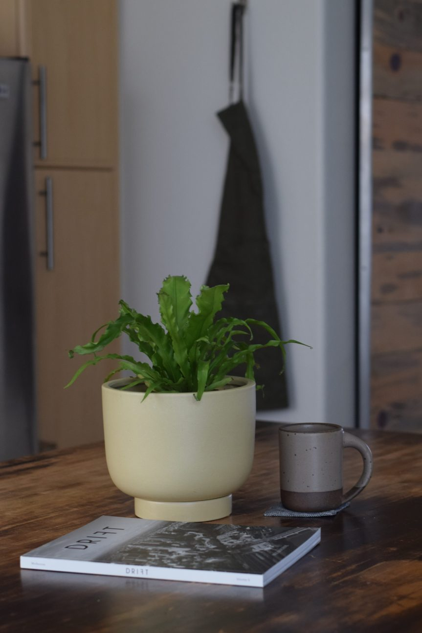 Minimalist Decor with Houseplants