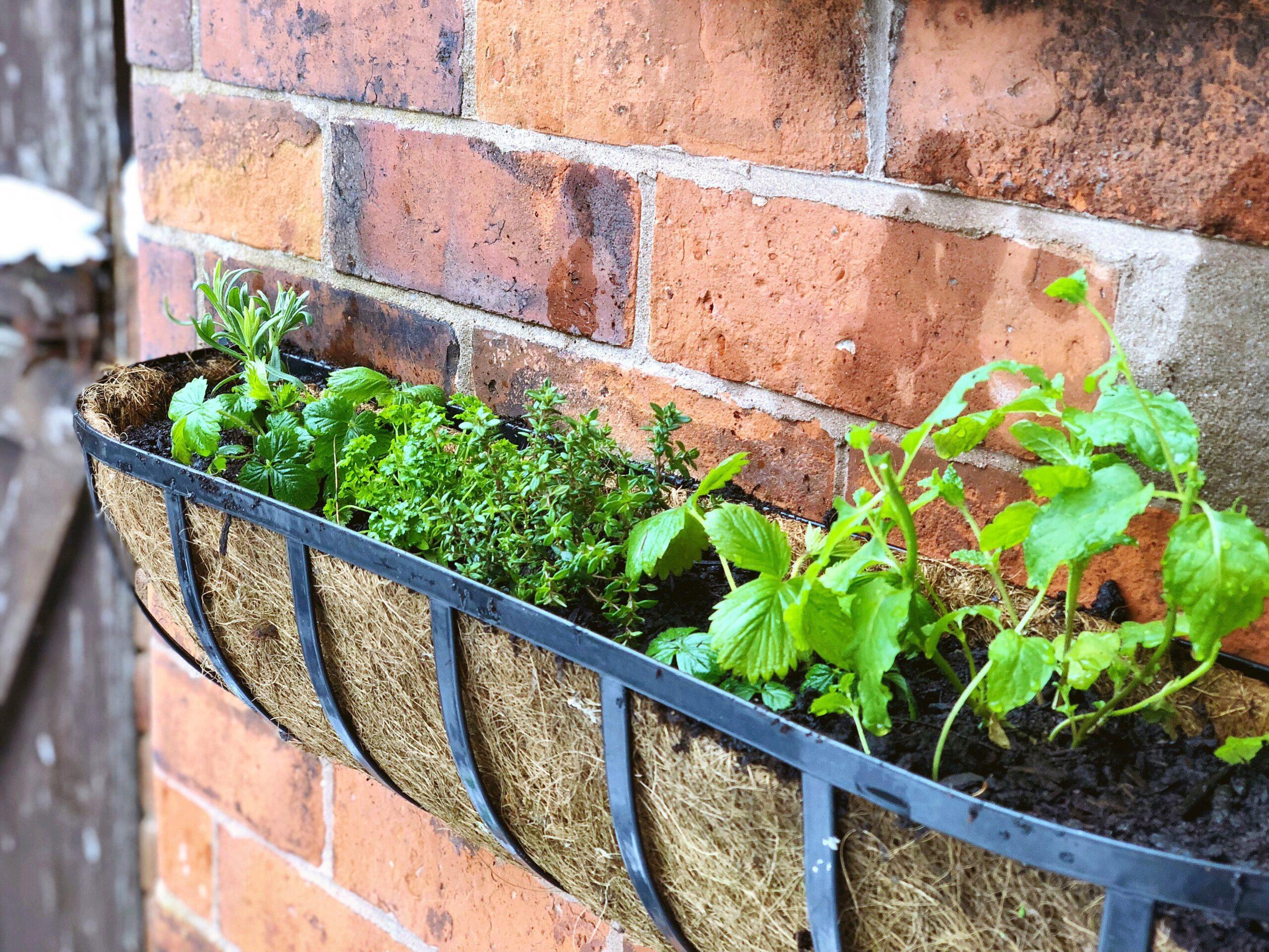 Create Your Own Herb Garden Window Box