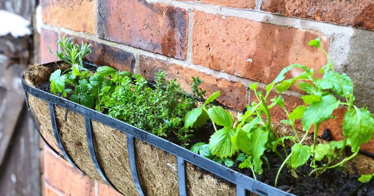 Create Your Own Herb Garden Window Box