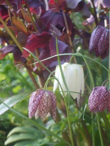 garden April 2016 007
