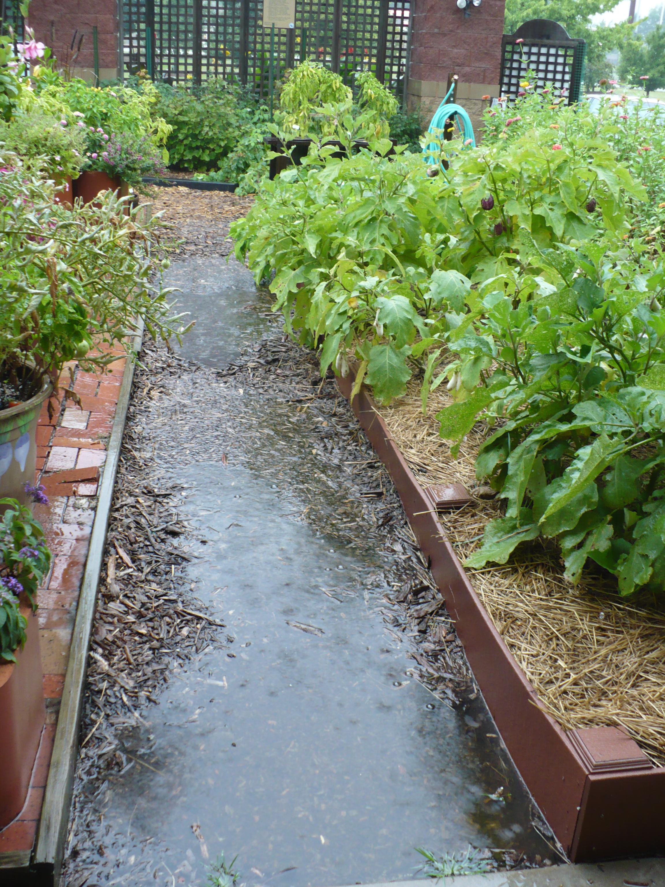 Soggy Garden