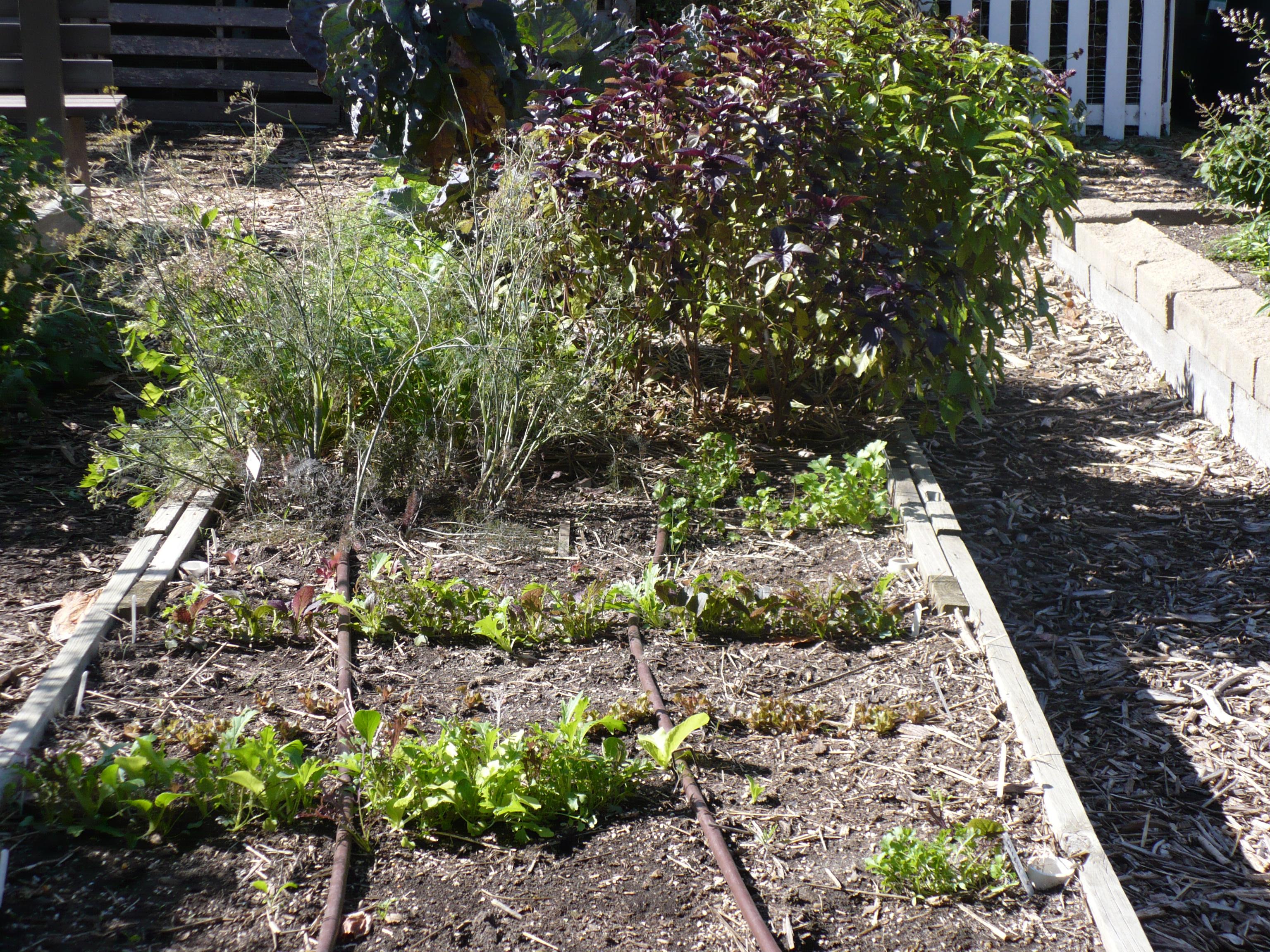 Fall Fo4 Garden