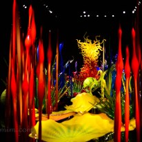 chihuly-9a