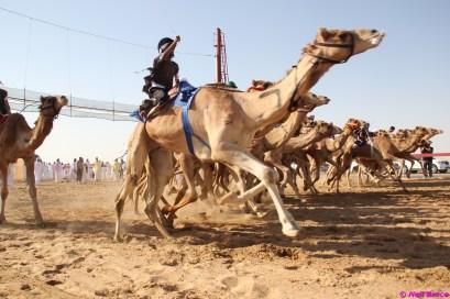 camel festival neil7