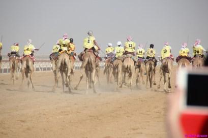 camel festival neil8