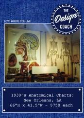 anatom posters POP