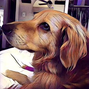 Prisma App Review - Test Image | The Design Jedi