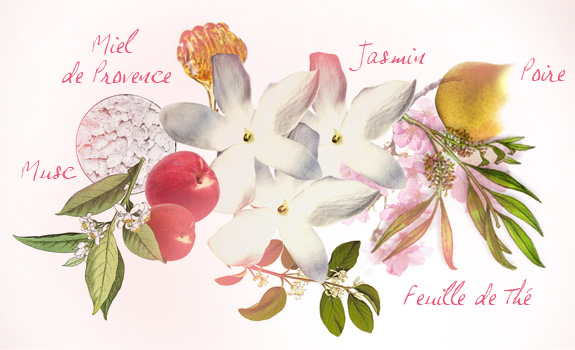 Perfume Ingredients