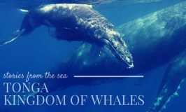 Amazing underwater adventures with humpback whales in Tonga