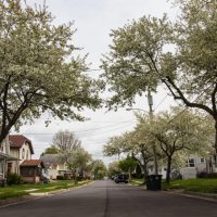 Akron is moving to protect its tree canopy. Here's why it matters.