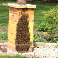 Akronisms | Inside Akron's backyard beehives