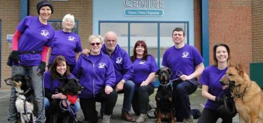 K9 Focus volunteers team