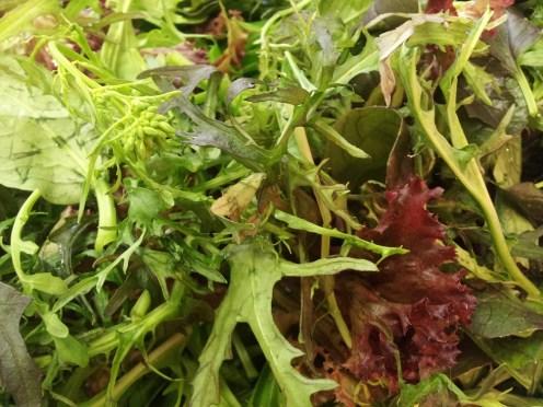 food Sharpham Trust Spring 2015 LO RES (1)