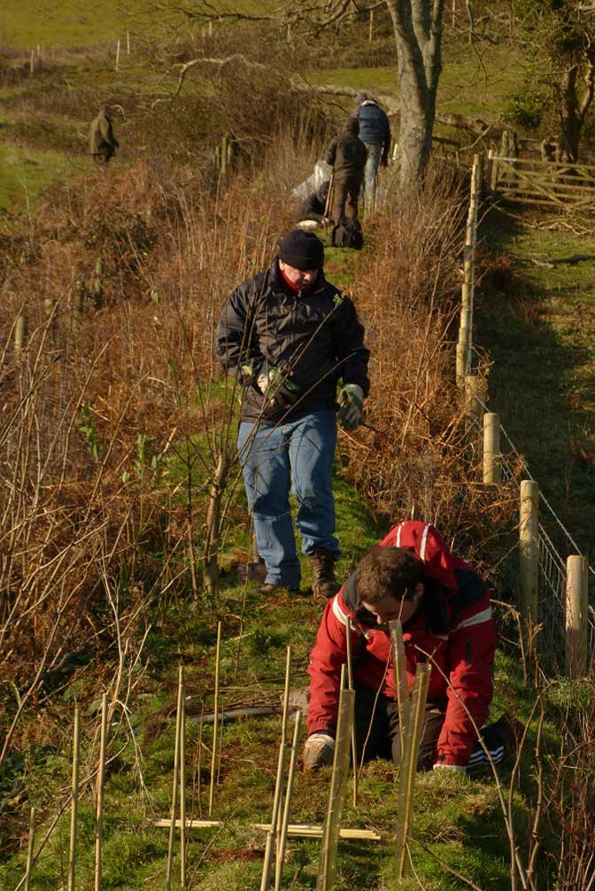 Creating hedgerows orchard care
