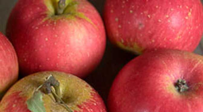 Eversfield-Organic-apples-discovery