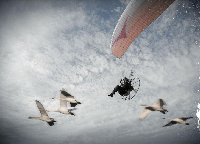 Sacha with swans