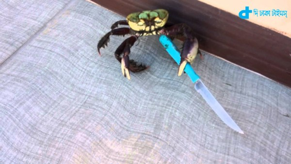 crab,  knife threat