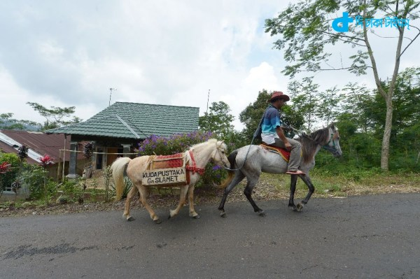 mobile library on a horse