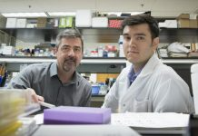 Norbert Leitinger, Ph.D. (left), and Vlad Serbulea, Ph.D.