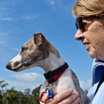 Dogs and Diabetes - Can Dogs Help People with Diabetes