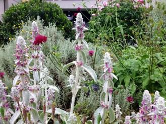 Physician's Garden