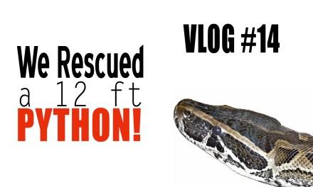 Vlog 14 – Python!