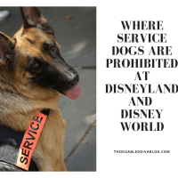 Where service dogs are prohibited at Disneyland and Disney World