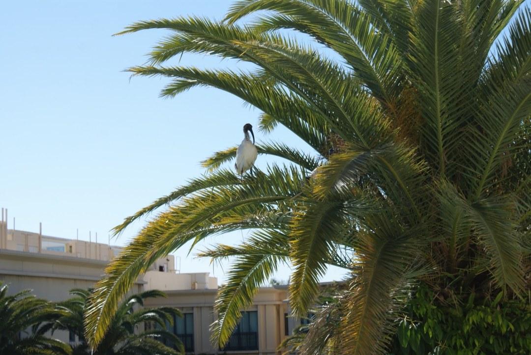 Palm Tree at the Palazzo Versace