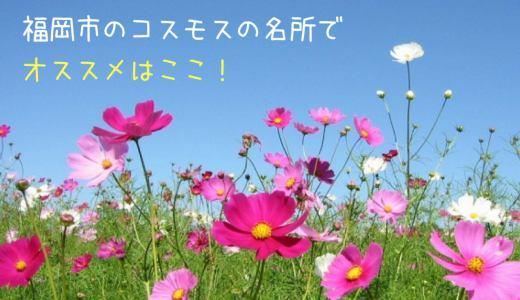 福岡市のコスモスの名所でオススメはここ!