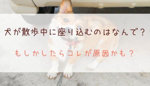 犬が散歩中に座り込むのはなんで?もしかしたらコレが原因かも?