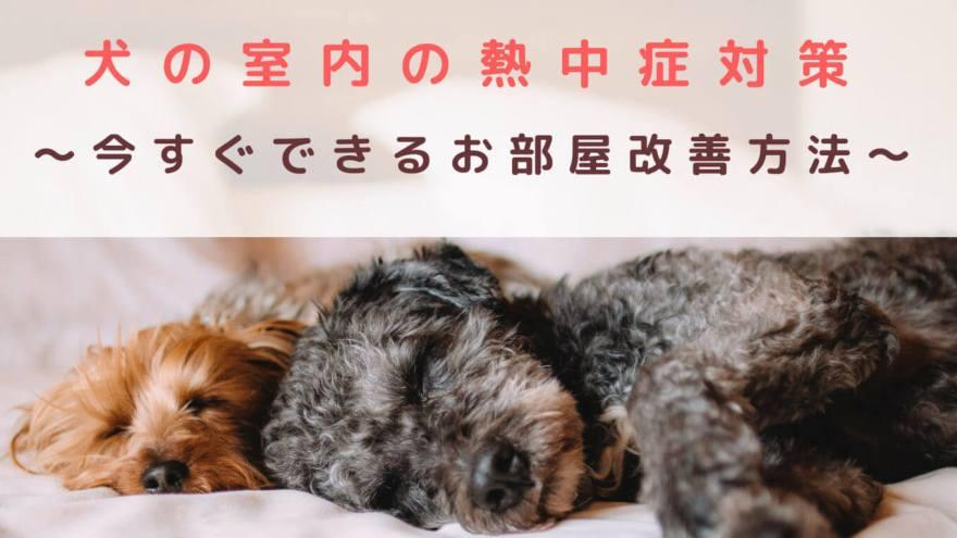 犬の室内の熱中症対策
