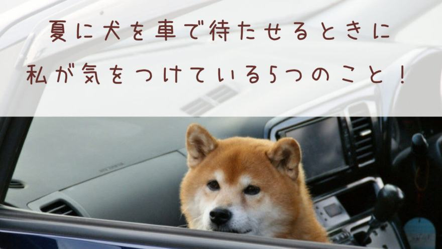 夏に犬を車で待たせるときに私が気をつけている5つのこと!