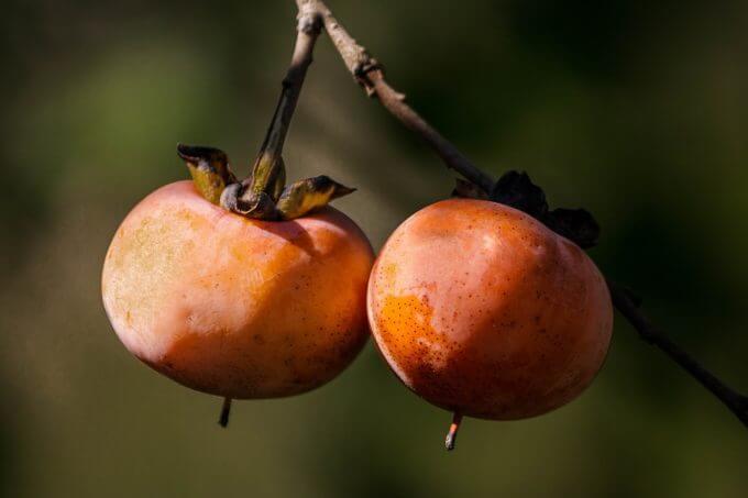 柿を大量に余った時にできる長持ちする保存方法と保存期間について!