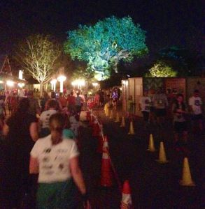 After 1 mile in the parking lot, you enter Animal Kingdom beautifully lighted.