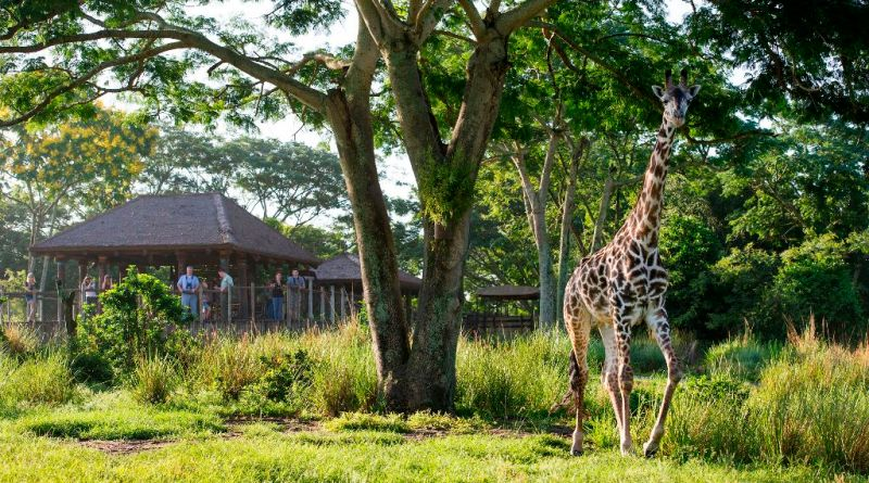 Adventure on the Wild Side at Disney's Animal Kingdom