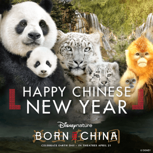 Born In China Chinese New Year