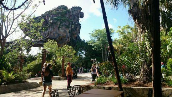 Pandora Photos Animal Kingdom
