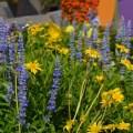 Flowers - wordless wednesday