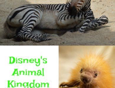 Disney animal kingdom babies