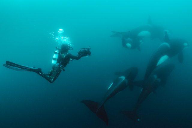 secret of the whales Disney Plus