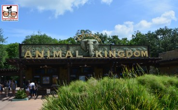 Lets head to Animal Kingdom...