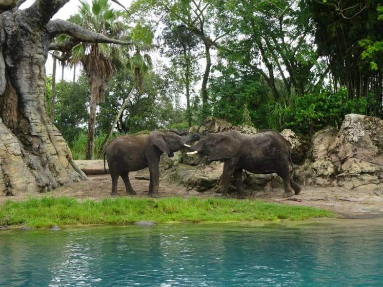 Reasons to Love Disney's Animal Kingdom