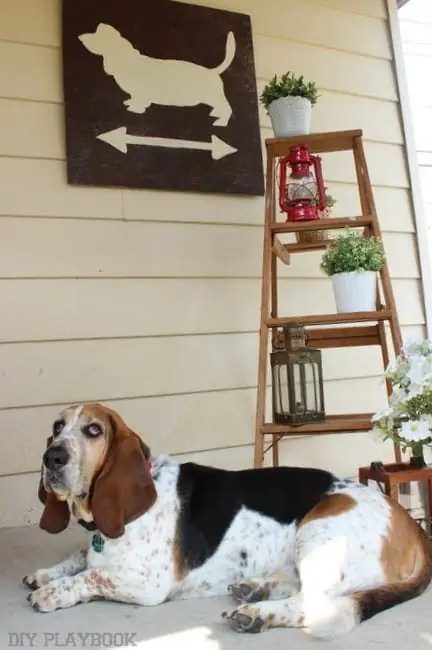 Basset crossing DIY