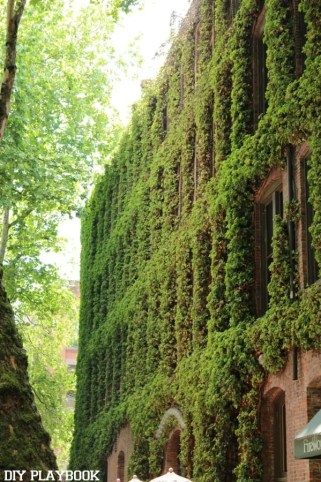 Ivy-wall-seattle